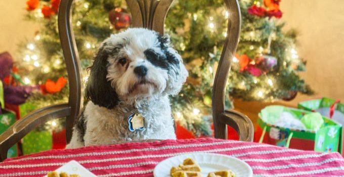 Christmas Pumpkin Dog Waffles