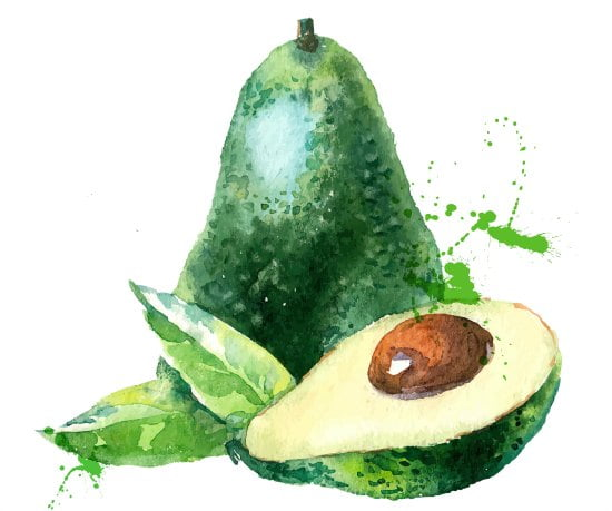 watercolor of a whole and half of an avocado